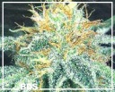 White widow -